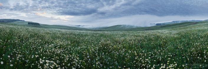 Vers les landes du Puech, Laguiole, Aveyron, Juin