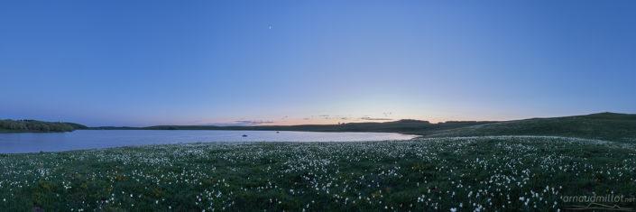 Narcisses au lac des Moines, Saint Chély d'Aubrac, Aveyron, Juin