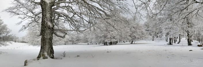 Vers le Roc du Cun, Curière, Aveyron, Décembre