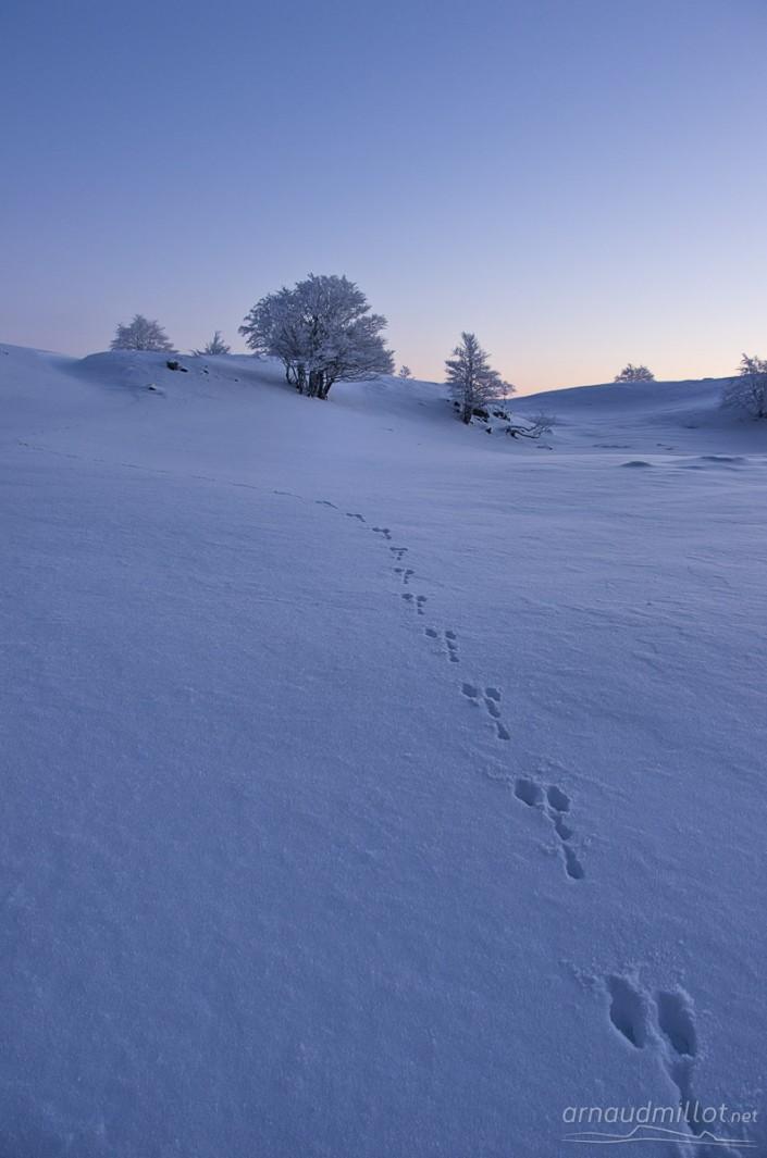 Arbre vers le Puy de Gudette sous la neige, Saint Chély d'Aubrac, Aveyron