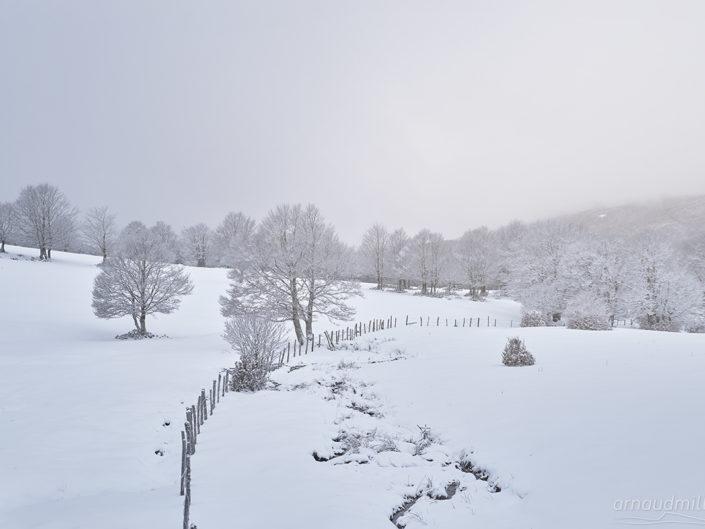 Près de Canuc, Saint Chély d'Aubrac, Aveyron, Février