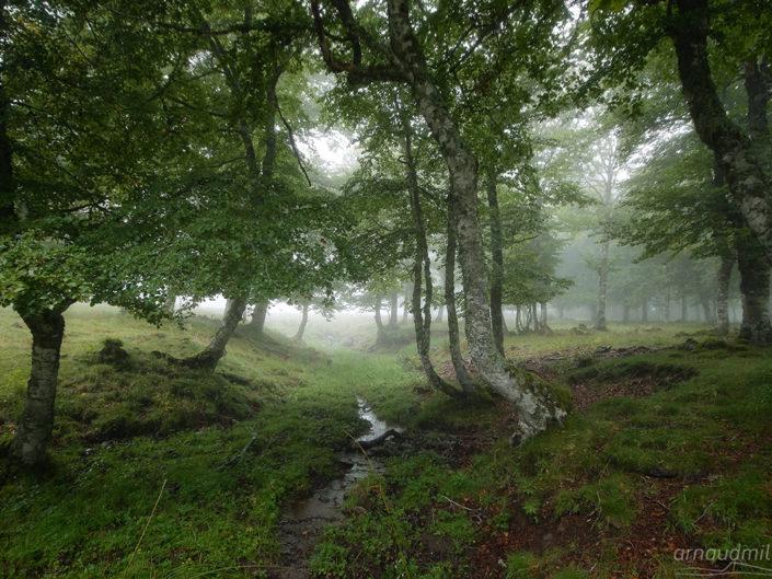Bois du Cun, Laguiole, Aveyron, Août