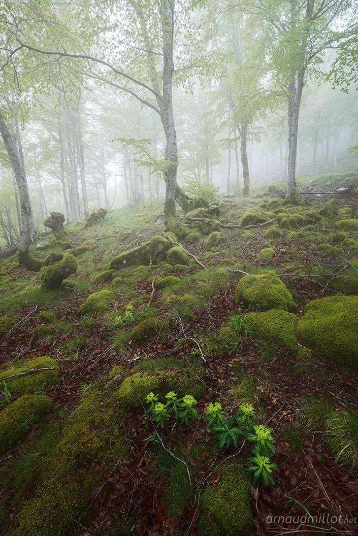 Euphorbes, Born, Aveyron, Mai