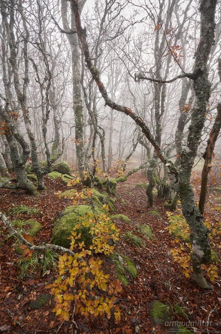 Truques d'Aubrac, Curières, Aveyron, Octobre