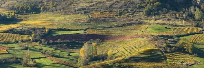Les vignes depuis Panat, Clairvaux, Aveyron, Novembre