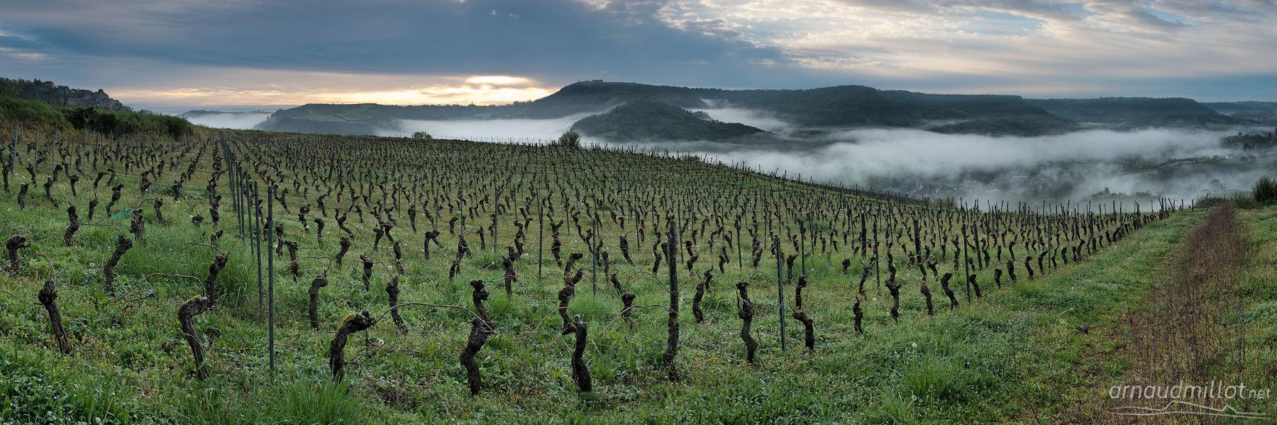 Vignes entre le Cros et Cassagnes, Bruéjouls, Aveyron, Avril