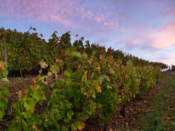 Sous Cassagnes Comtaux, Goutrens, Aveyron, Octobre