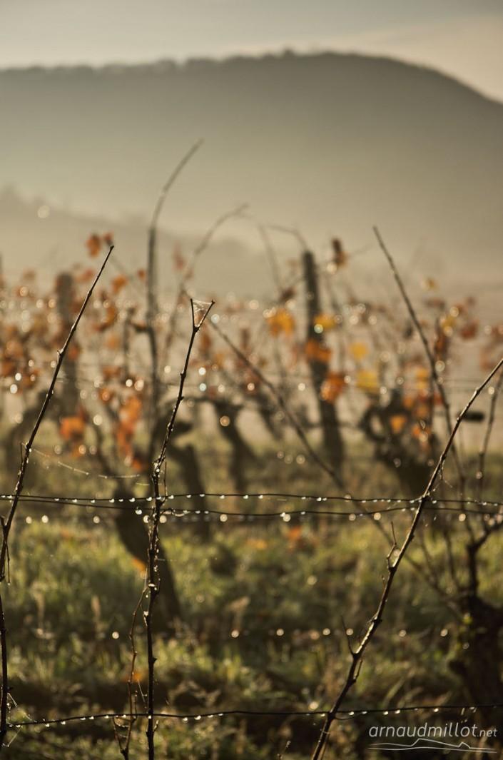 Vers las parras, Bruéjouls, Aveyron, Novembre