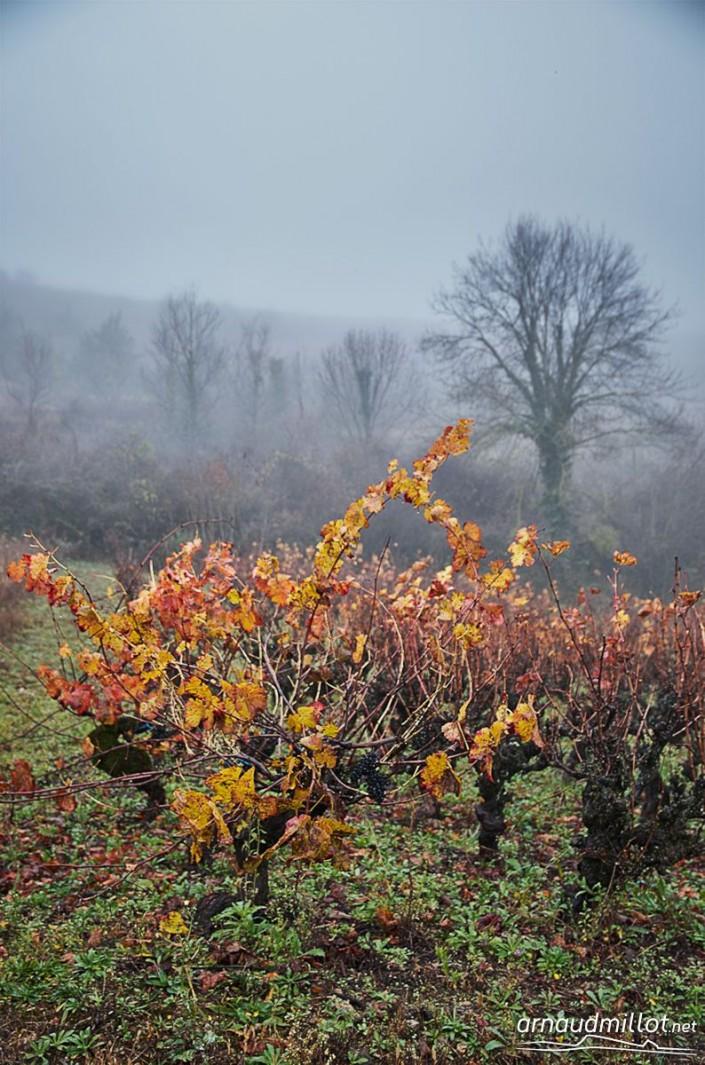 Près des Bessadounes, Clairvaux, Aveyron, Novembre