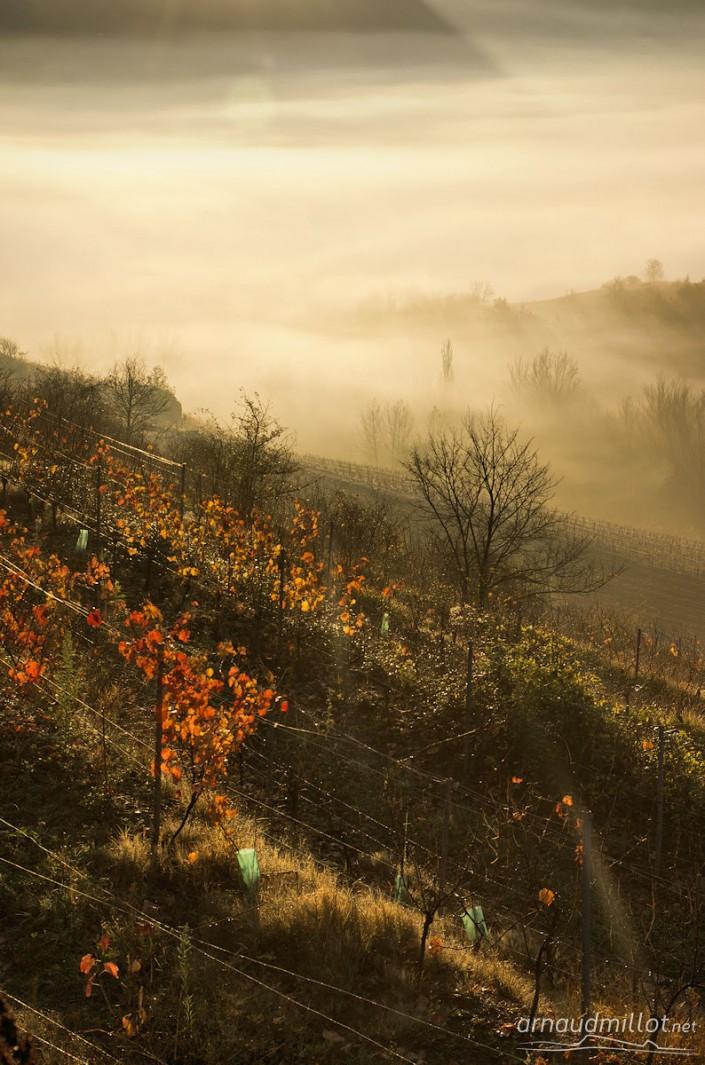 Vignes de Marcillac vers le Cros, Goutrens, Aveyron, Novembre